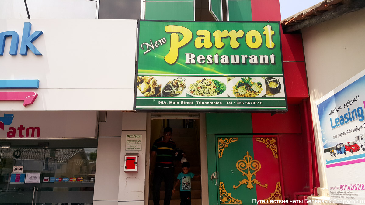 Cafe Parrot