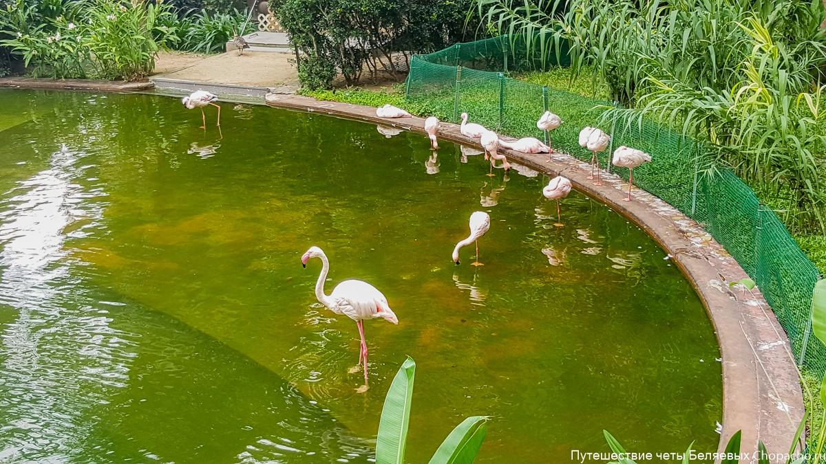 Розовые фламинго в Гонконге