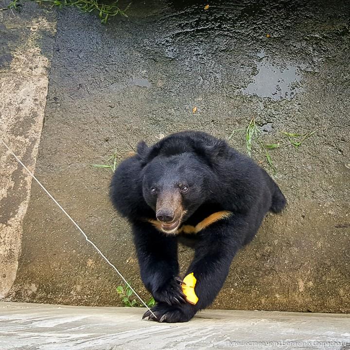 Медведь в зоопарке в парке Янг Бей, Нячанг, Вьетнам