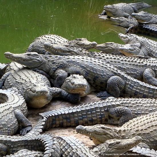 Крокодиловая ферма в Нячанге